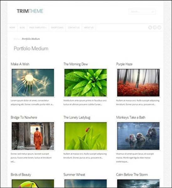 4-Trim Business and Portfolio Template