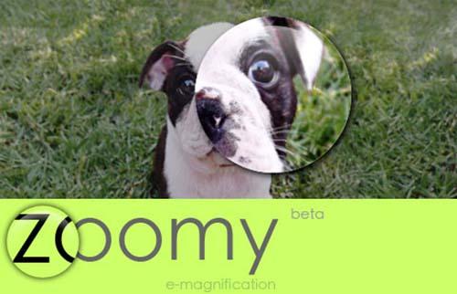 5. Zoomy