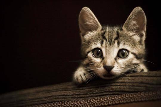 My Cat-1