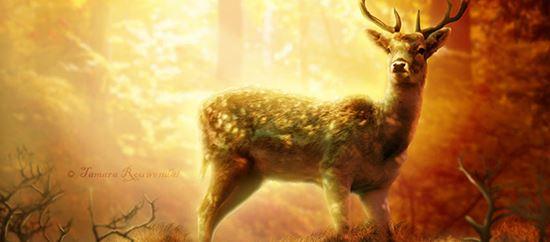 Photo-Manipulation-for-a-Wild-Animal