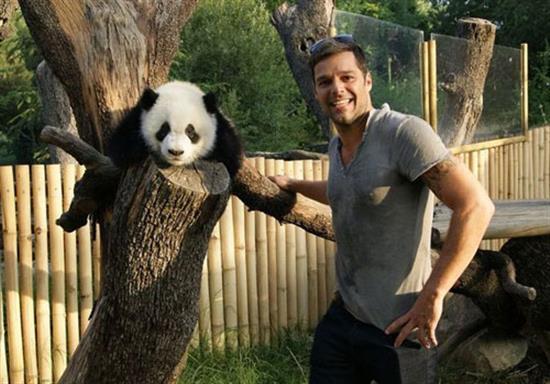 baby-panda-photos-14