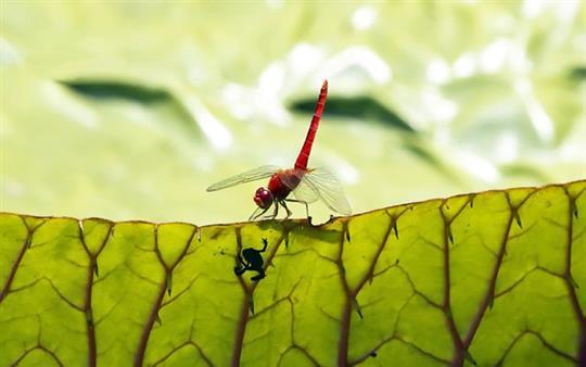 cute-froglet-fly