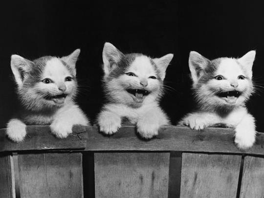 cute-laughing-cats