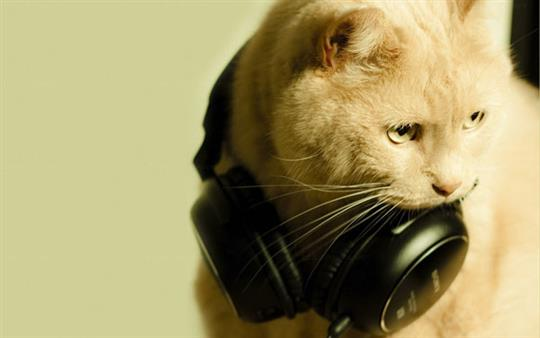 cute-music-cat-headphones