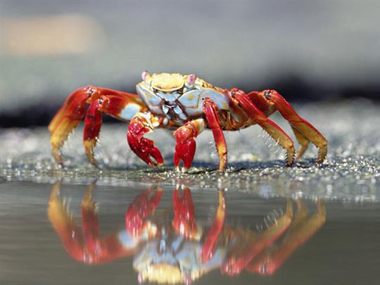 cute-sea-side-crab