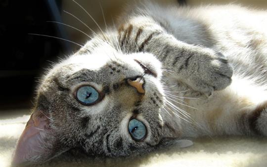 cute-upside-down-cat