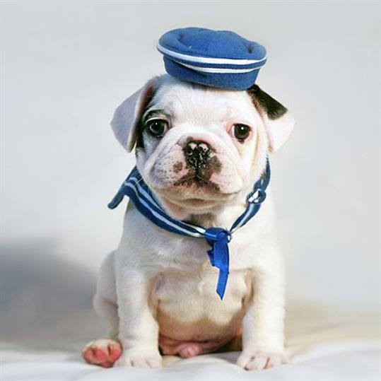 puppy-sailor