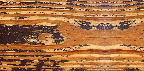 woodtexture-5