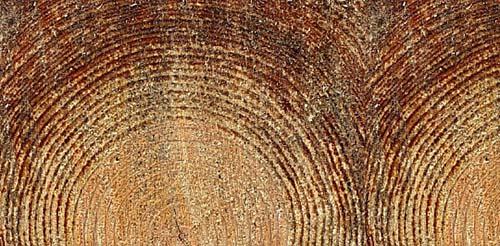 woodtexture-6