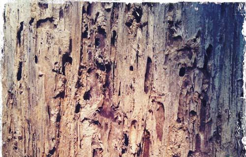 woodtexture-7