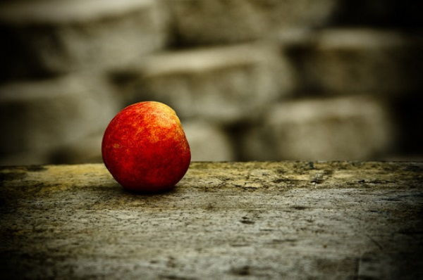 Still-Life-Photography-26