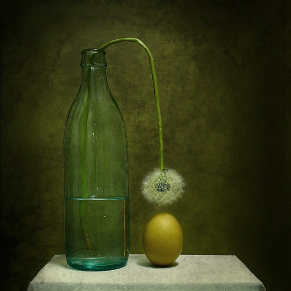 Still-Life-Photography-8